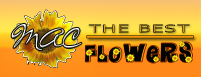 MAC Flowers